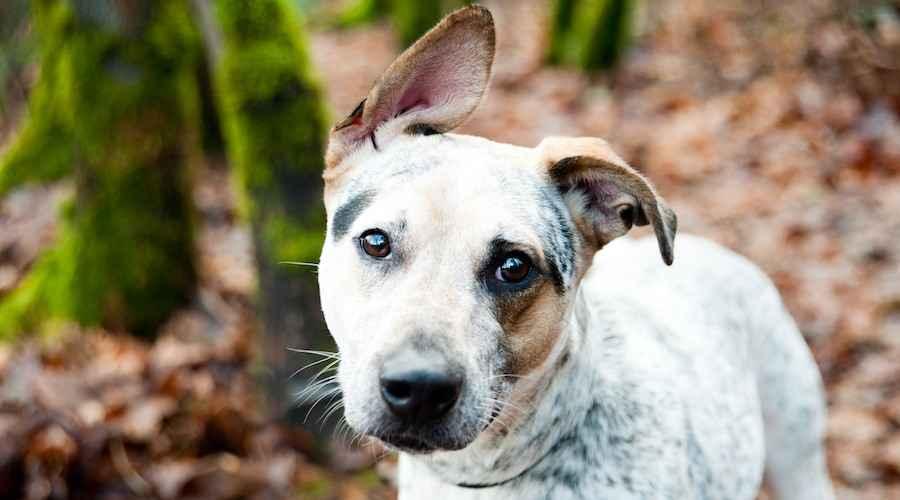 Смесени породи кучета: Тези 10 мута ще спечелят сърцето ви