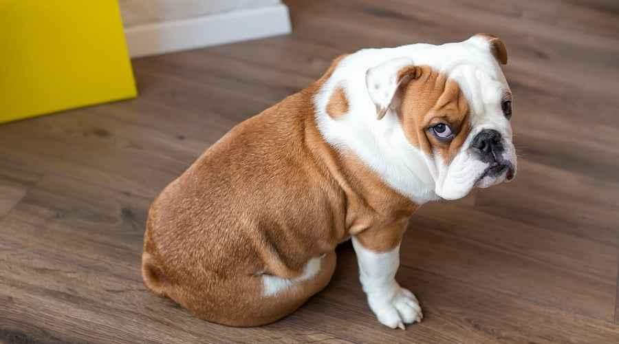 My Dog Ate Bar или течен сапун! Какво трябва да направя по-нататък?