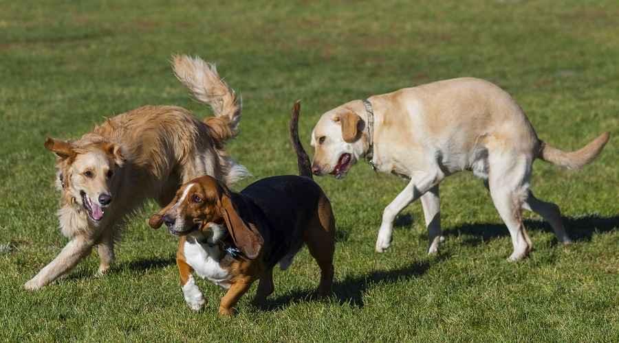 De beste hundeparkene i Delaware (Bethany Beach, Carousel Farm & More)
