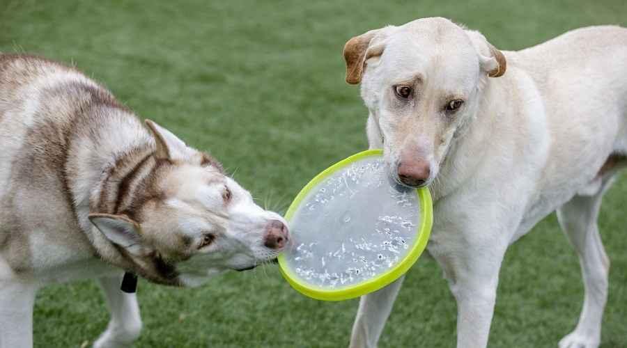 הכי טובים: פארקי כלבים בקונטיקט (קולצ'סטר, סטמפורד ועוד)