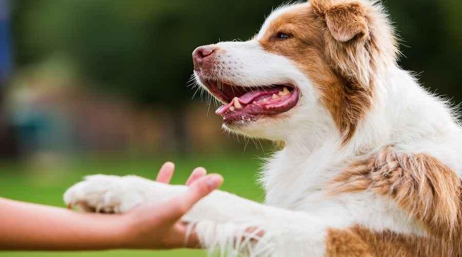 Συμβόλαιο για κουτάβια για παιδιά: Μια διασκεδαστική δέσμευση για την κατοχή ενός σκύλου
