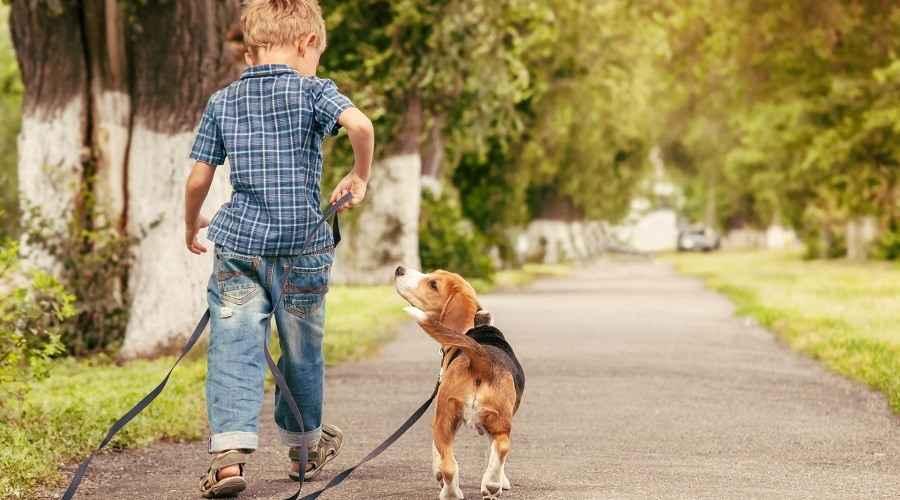 Jak se starat o psa: Povinnosti psů odpovídající věku pro děti a mládež
