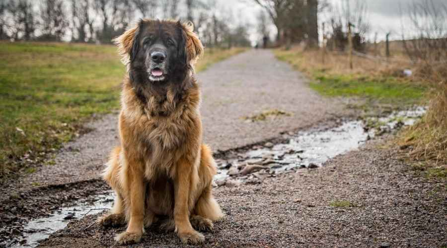 Store hundenavne: 200 forskellige navne til kæmpe racer hos mænd og kvinder