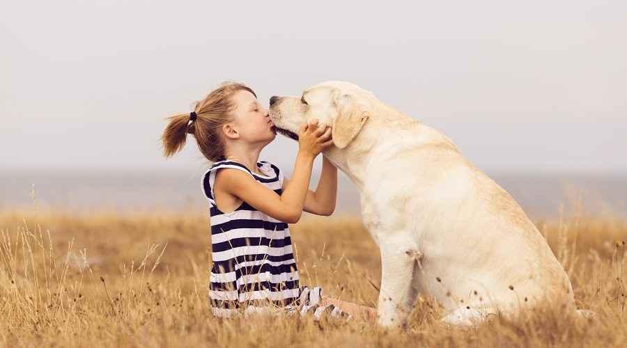 Esteu a punt per posseir un gos? Expectatives i responsabilitats