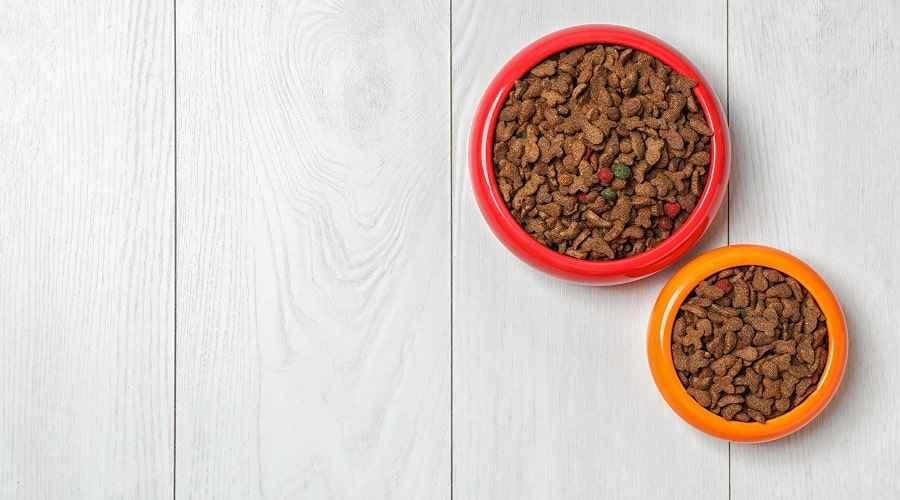 Iams vs. Pedigree: quin menjar per a gossos és millor per al vostre cadell?