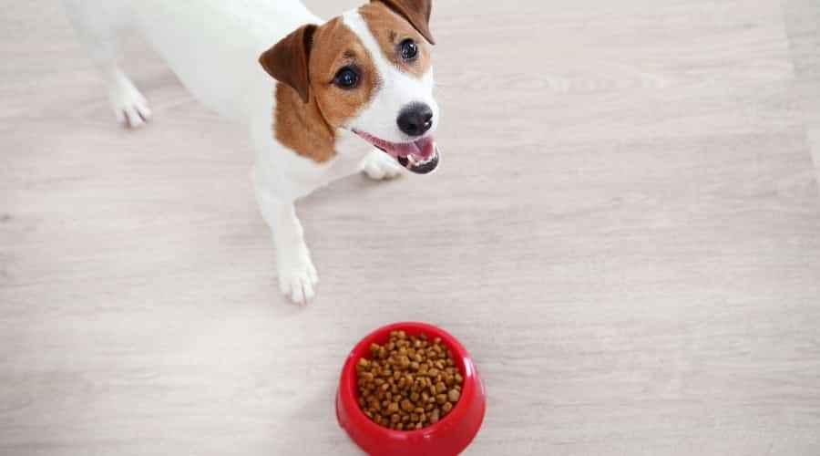 Nejlepší krmivo pro psy bez luštěnin, hrášku nebo čočky: Hodnocení a recenze