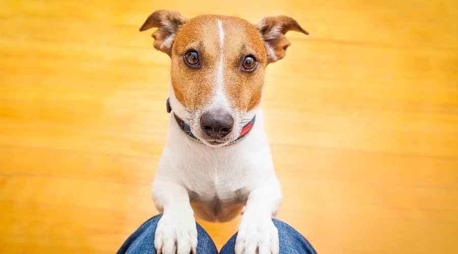 Köpekler Fındık Yiyebilir mi? Köpekler Hangi Kuruyemişleri Güvenle Yiyebilir?