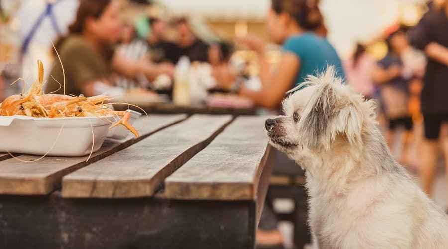 Kan hundar äta räkor? Vad händer när de gör?