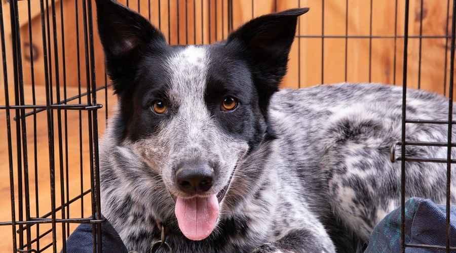 Bedste tunge hundekasser, der er praktisk talt uforgængelige