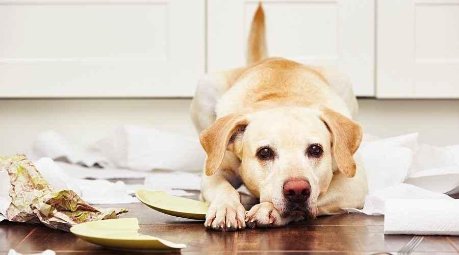 Geriausi šiukšliadėžės šunims: šios rakinamos skardinės neleis šuniukams